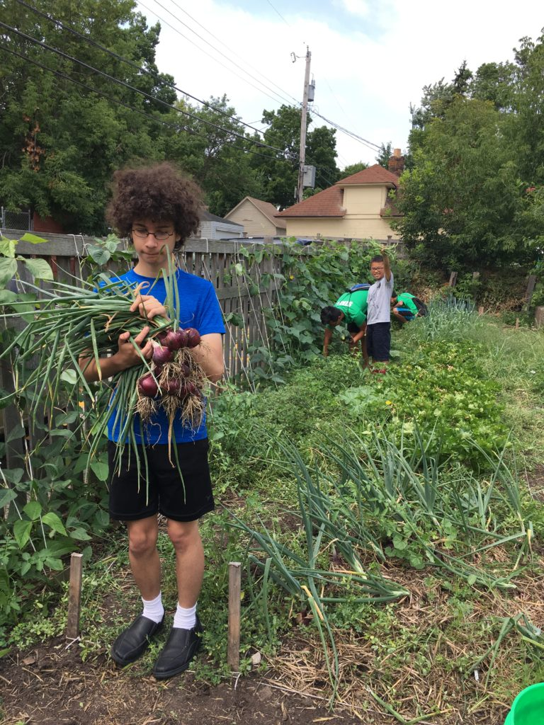 Teens who are participants in YouthFarm harvest onions and tend to the garden at NeighborWorks Home Partners.
