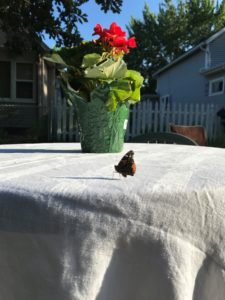 a butterfly lands near a flower on a table at the memorial service