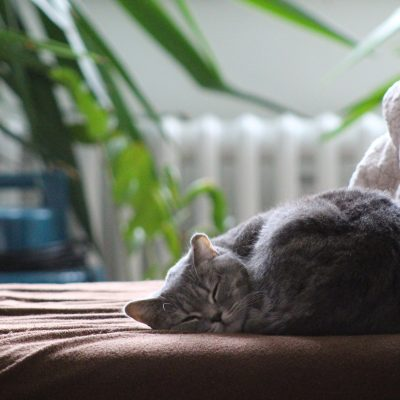 A cat sleeps on a blanket-covered chaise in front of a radiator.